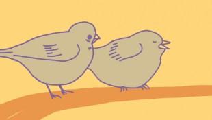 Birds by Lisa Cheong