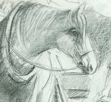 barney horse nairns dairy