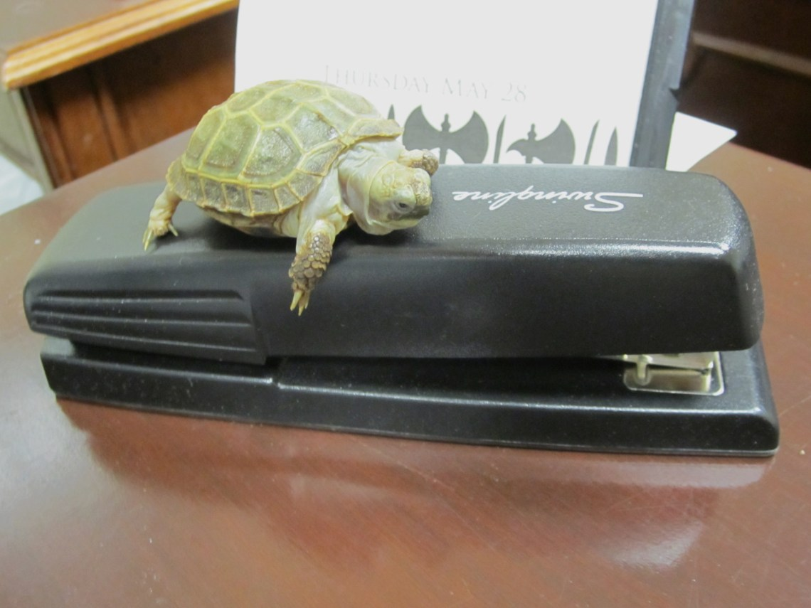 This stapler is just the right size for me to relax on top of it!