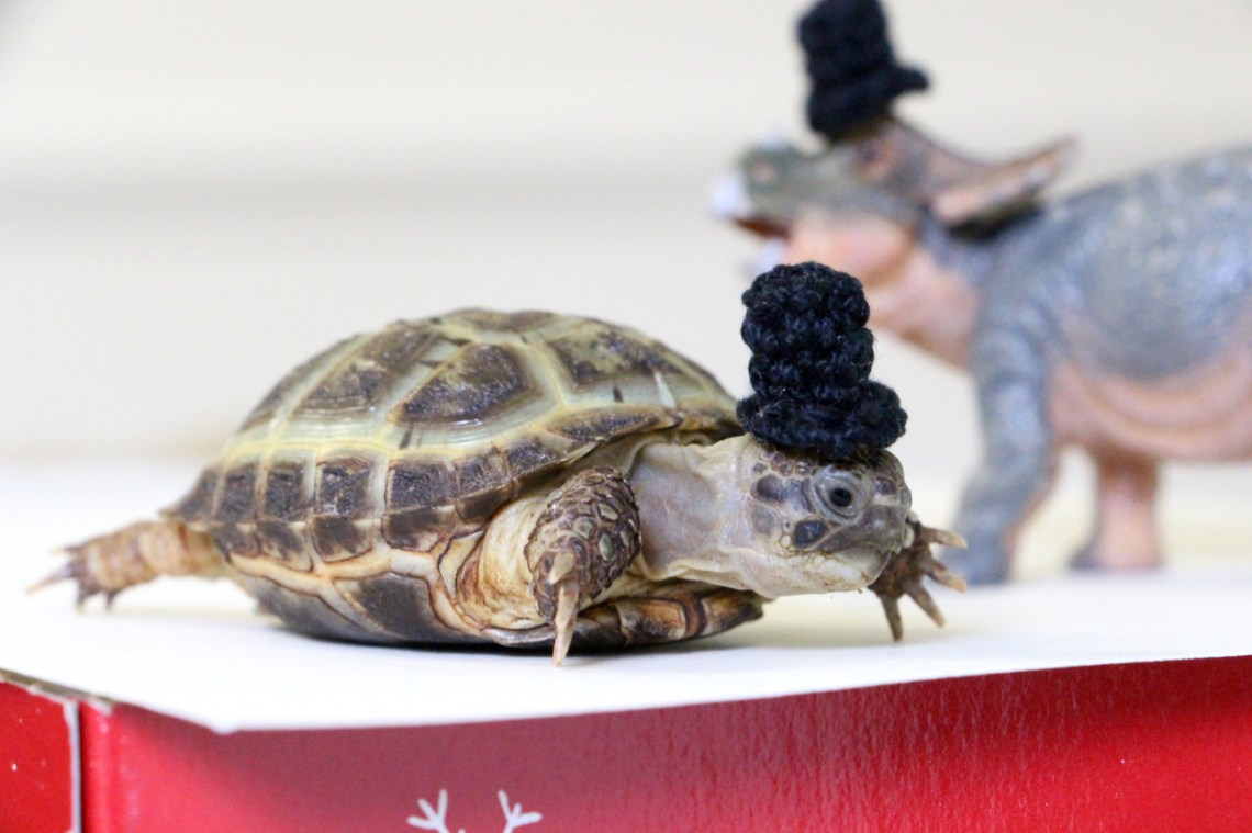 Don't I look dashing in my top hat?
