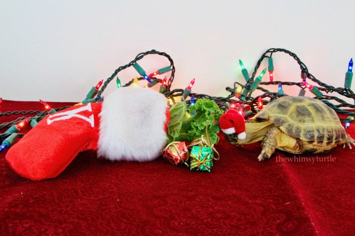 Hooray!  Santa filled my stocking with radicchio under the kale!
