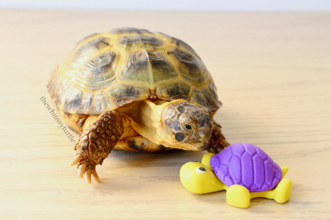 ...and your shell is flower-colored, too...