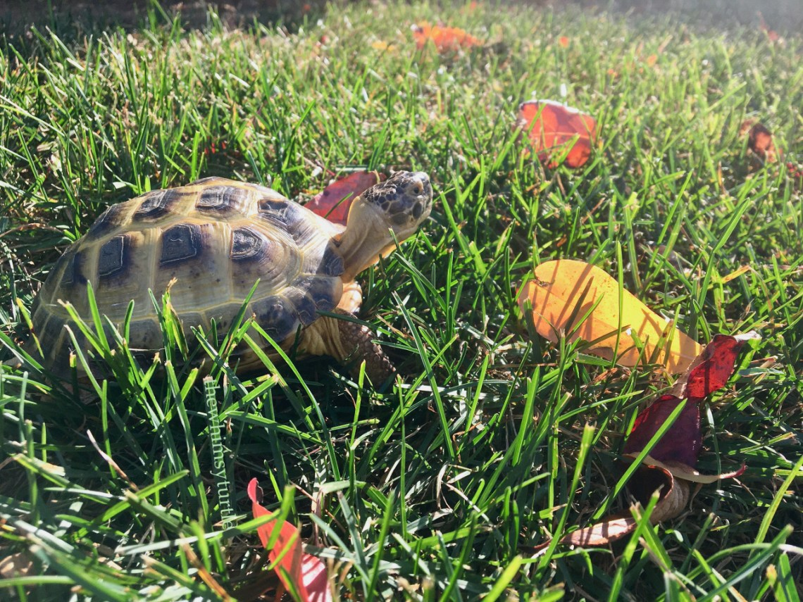 So many gorgeous leaves in the grass!