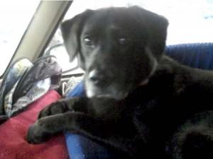 Jake dog concerned Jeep Cherokee