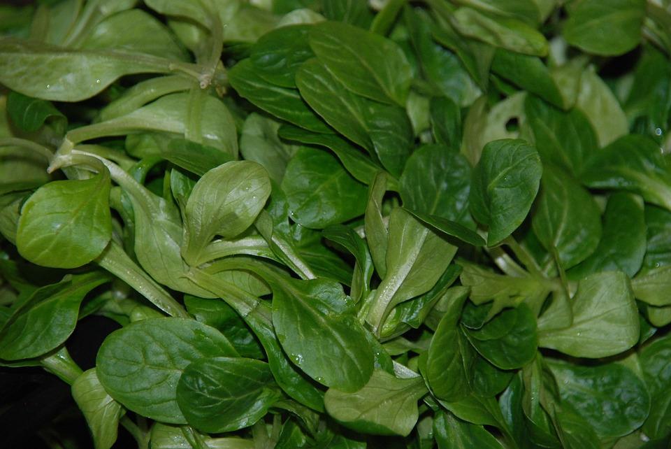La valeriana: la pianta per il tuo benessere toscana in forma