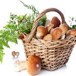 La dieta autunnale - Verdura