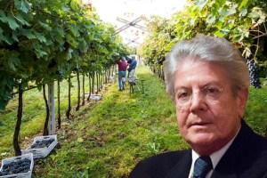 Renzo Bighignoli, presidente di Cantina di Negrar