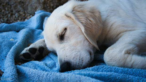 Crate Training Times When You SHOULD NOT Crate Your Dog - Dog escapes from kennel to comfort abandoned crying puppies