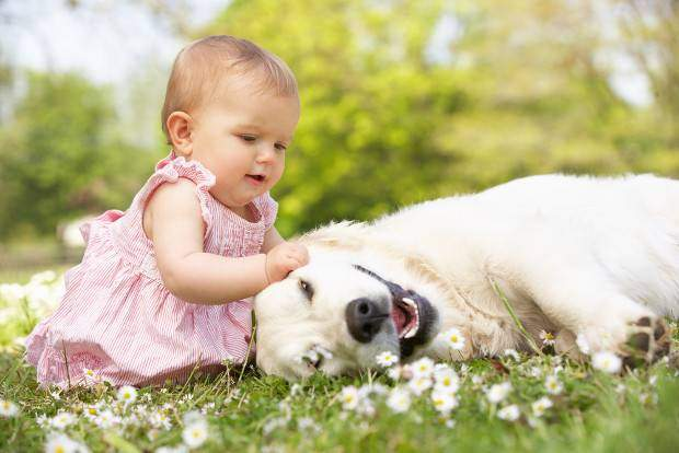 A baby in pink dress stroking a laying golden retriever