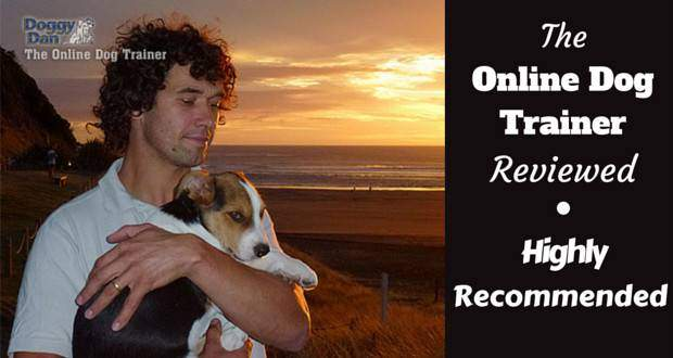 The online dog trainer review written beside Dan with his pupy Moses on a beach in front of a sunset