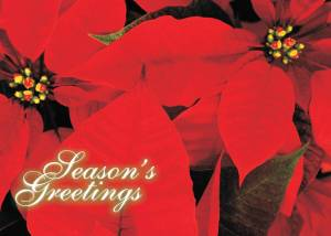 Holiday Poinsetta Card Front