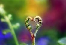 Photo of Iubirea- cuvântul cu definiţii multiple