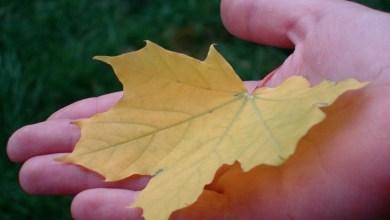 Photo of Ca o frunză în zi de toamnă