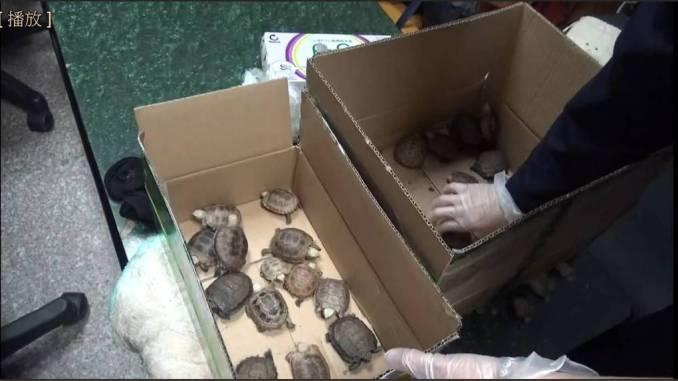 turtle smuggling taiwan