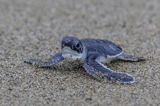 sea turtles taiwan