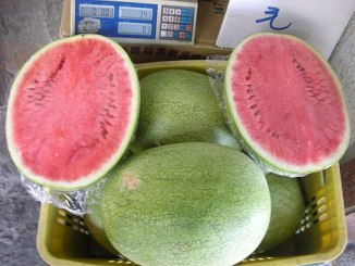 miaoli watermelon