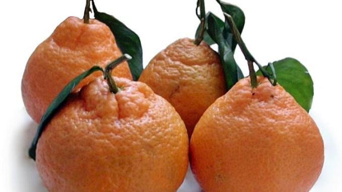 taiwan mandarin orange