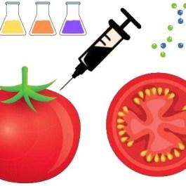 alimente modificate genetic exemple