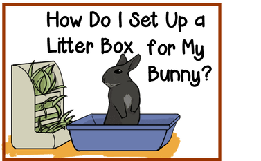 litter box set up to the moon and