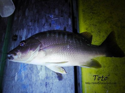Pesca en San Andrés 11
