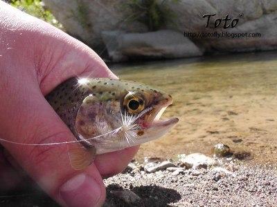 Pesca con Lajita