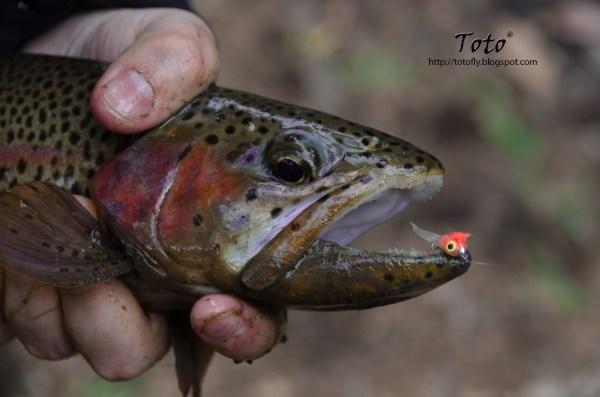 Piscicultura Río Blanco - Baby trout 4