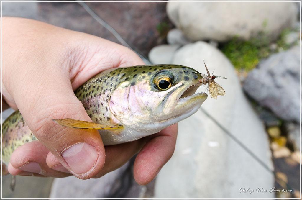 Reporte fotográfico de pesca con mosca en la zona central