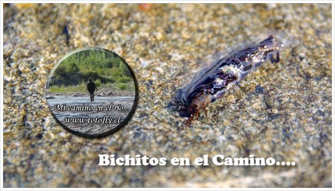 Bichitos en el camino... Entomología y otras hiervas