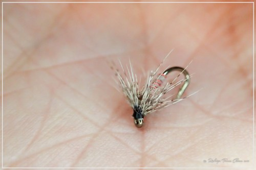 Soft Hackle by Toto