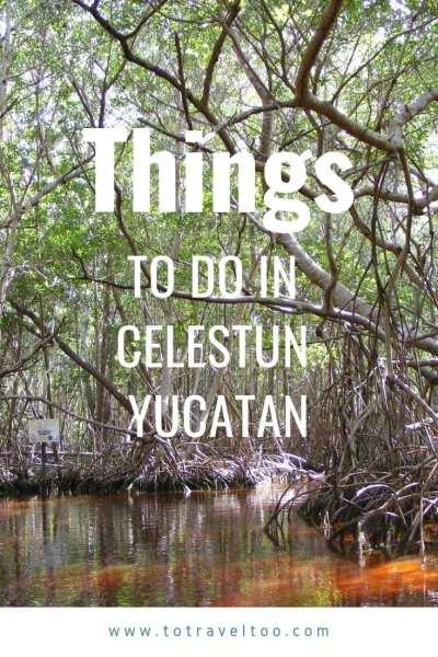 What to do in Celestun Mexico