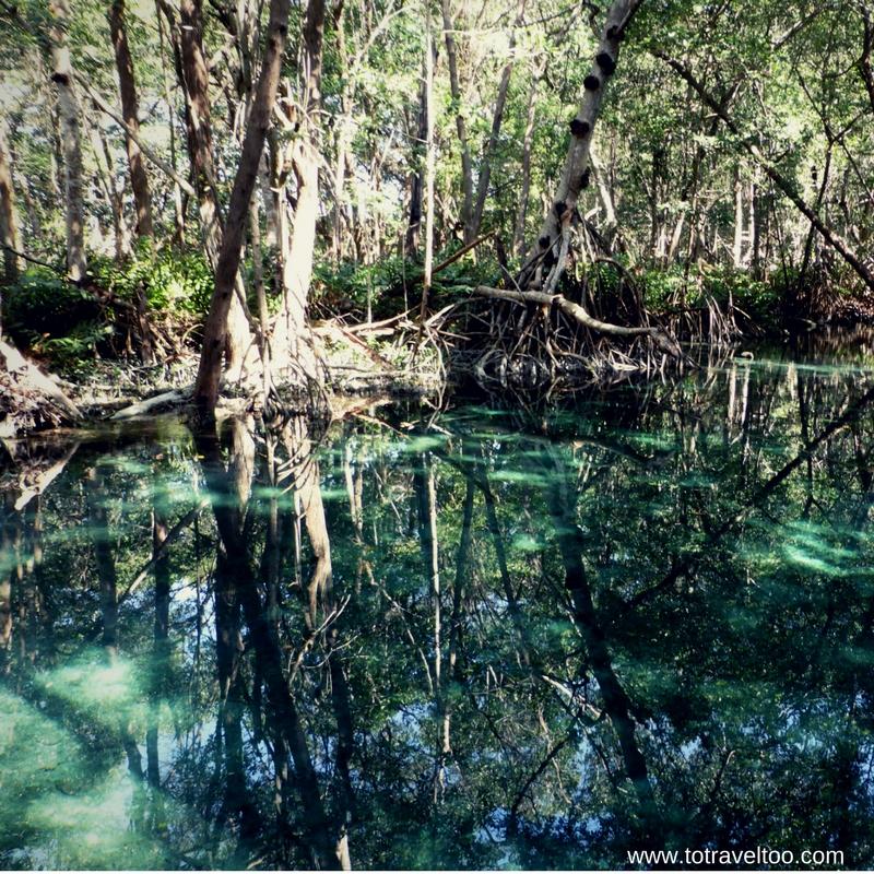 Beautiful mangroves of Celestun