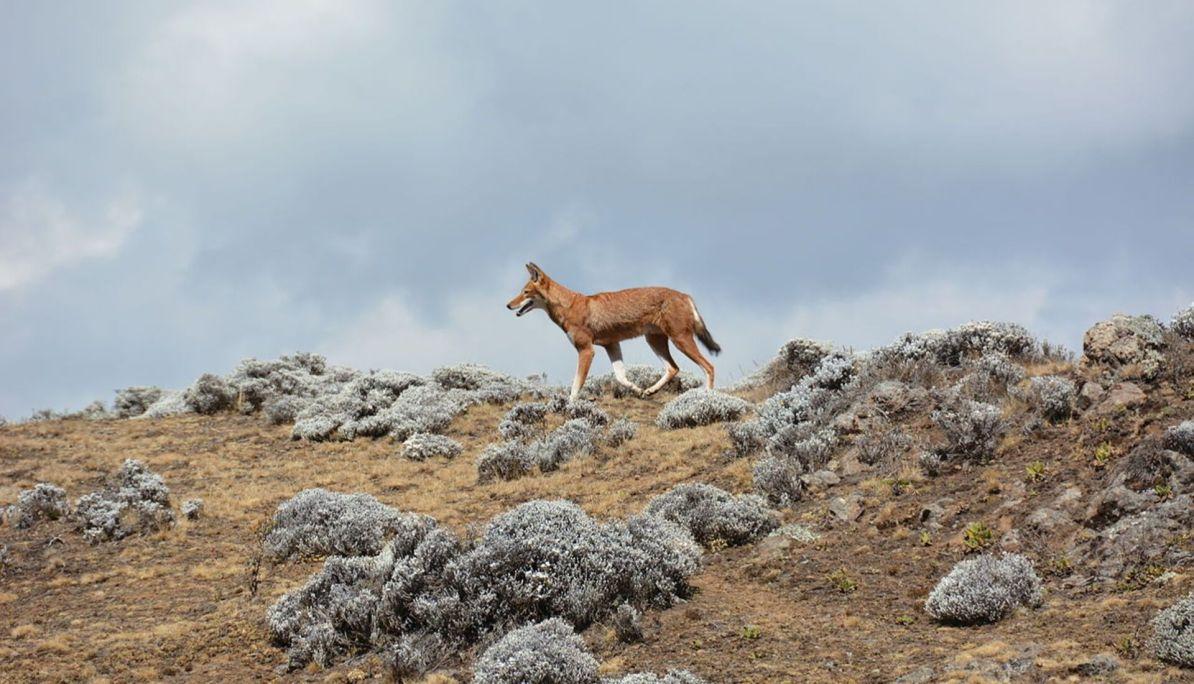 Bale Mountain National Park