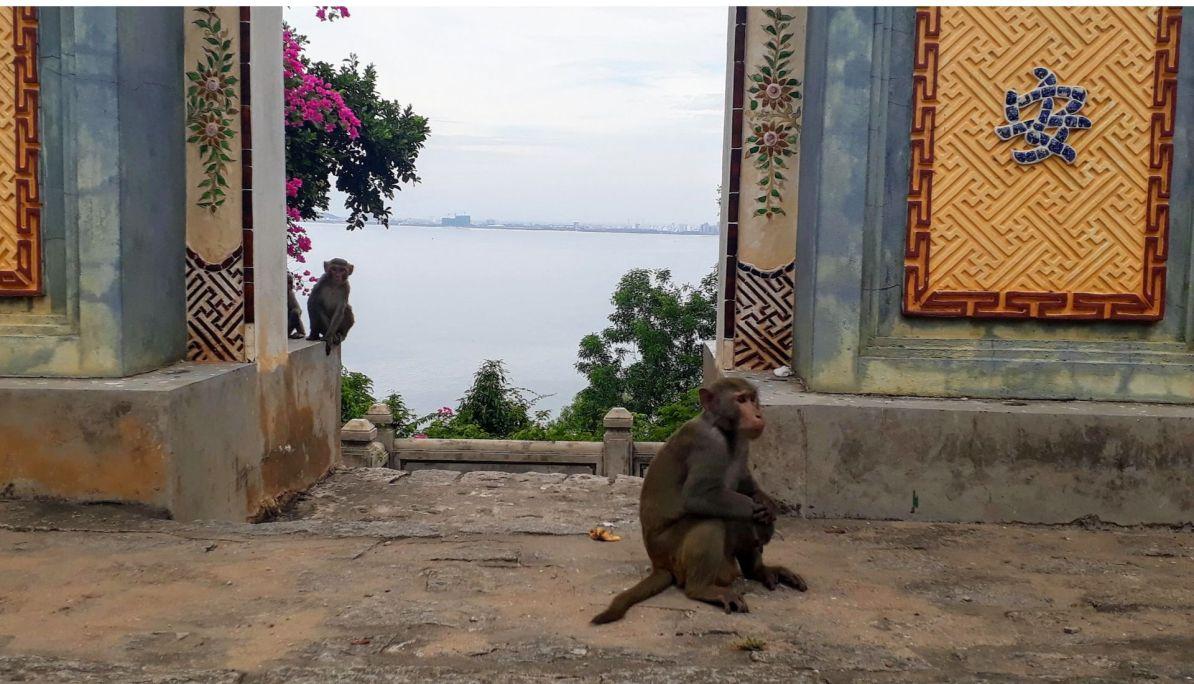 Monkeys eyeing off humans
