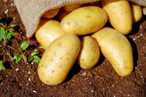 Potatoes for weight gaining in babies