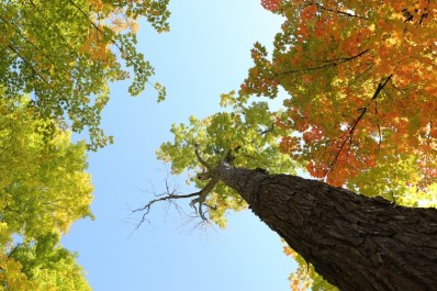 2014-10-Life-of-Pix-free-stock-photos-trees-autumn-leaves-sky-leeroy (800x533)