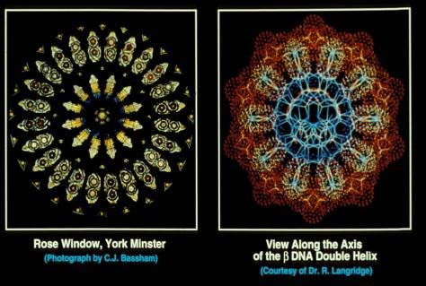 window-double-helix1