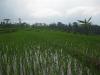 indonesie_2921
