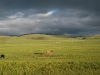 mongolie-57