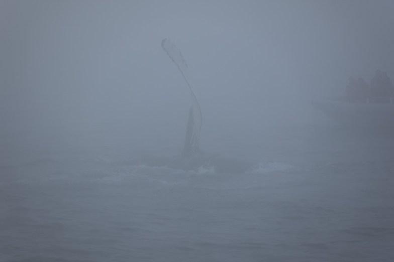 2018-08-06 - Baleines-1