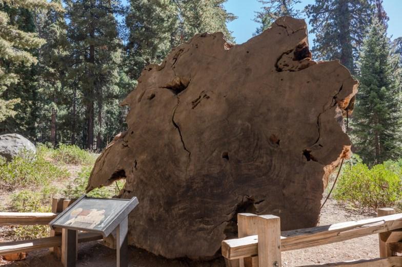 2018-09-20 - Sequoia Park-18