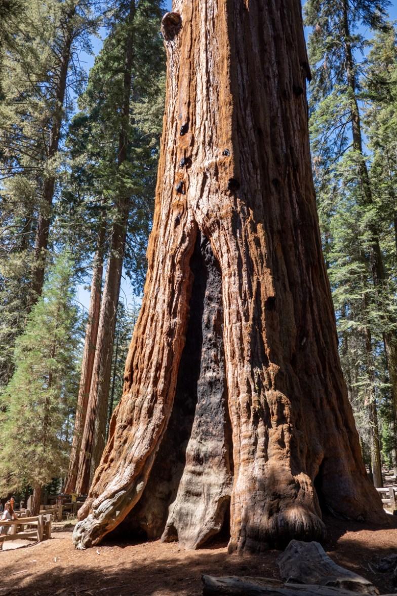 2018-09-20 - Sequoia Park-4