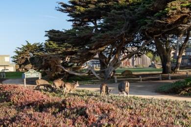 2018-09-23 - Monterey-25