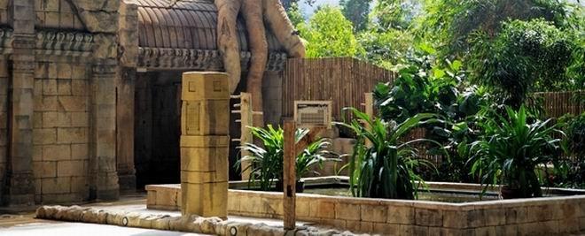Dschungeldorf