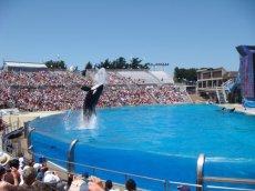 Seaworld San Diego in Kalifornien mit seinem springenden Killerwal Shamu