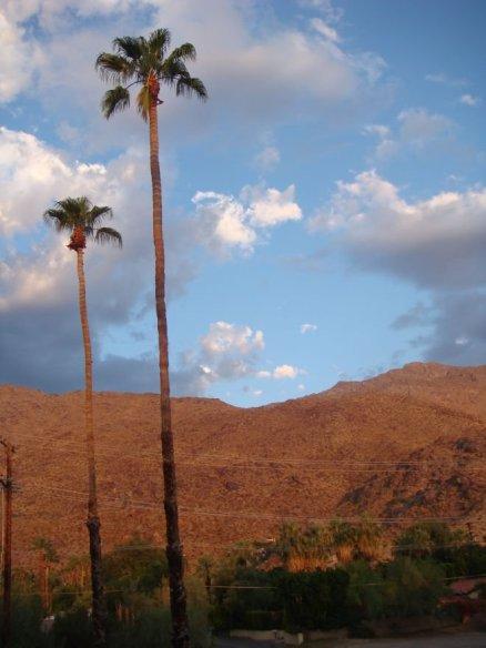 Einsame Palmen im Sonnenuntergang von Palm Springs