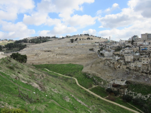 City of David The Mount of Olives - green from the winter rains