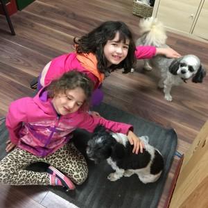 Getaway at KOA Toronto West  - dogs