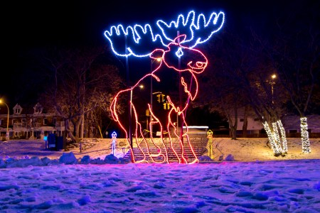 Festival of Lights display of moose