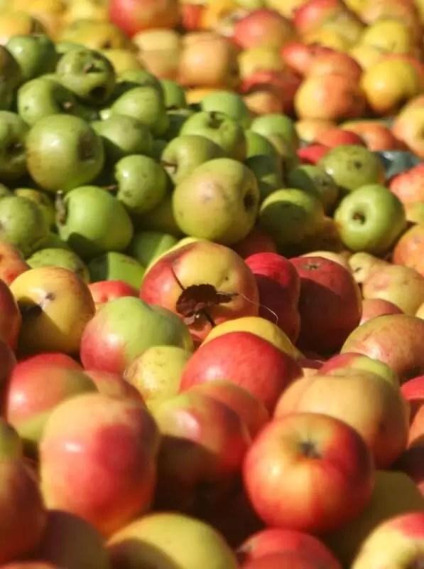 Fête de la Pomme et du Miel