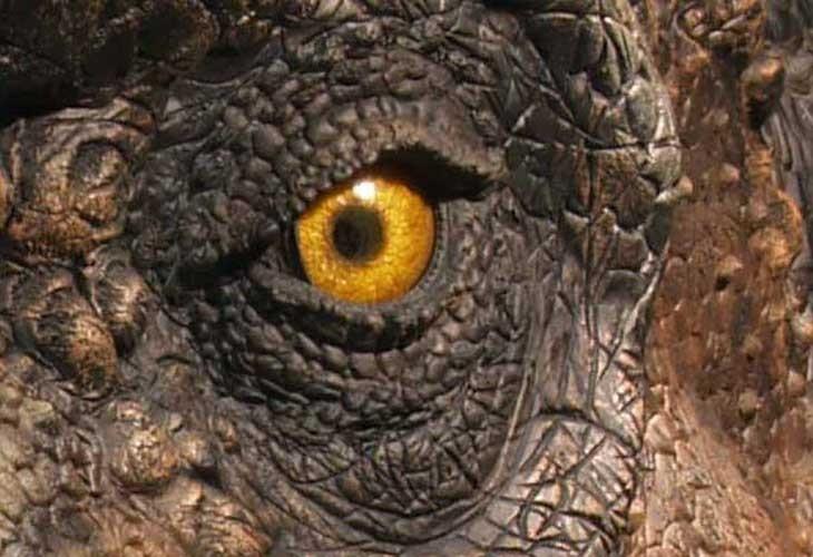 Muse Parc Des Dinosaures Bon Plan Office De Tourisme
